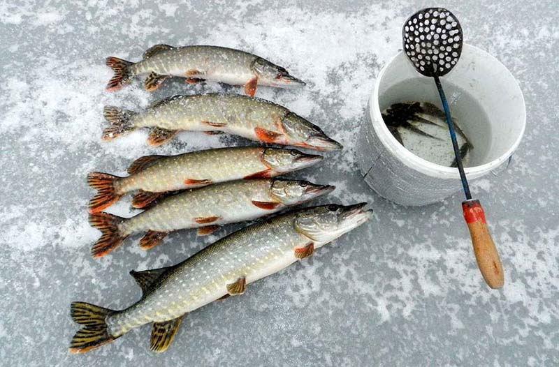электронный приманка для рыбы