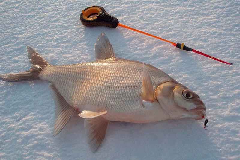 Ловля леща зимой http://my-fishing.info/